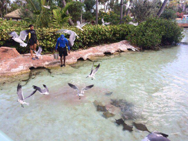 Багамы - фото 42