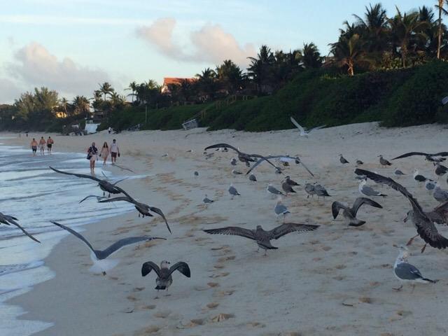 Багамы - фото 51